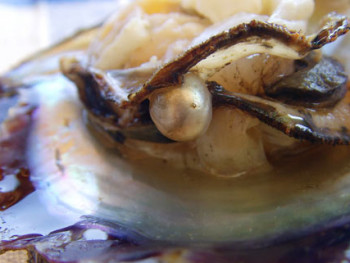 Oysters and Sauerkraut