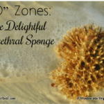 """O"" Zones:  The Delightful Urethral Sponge"