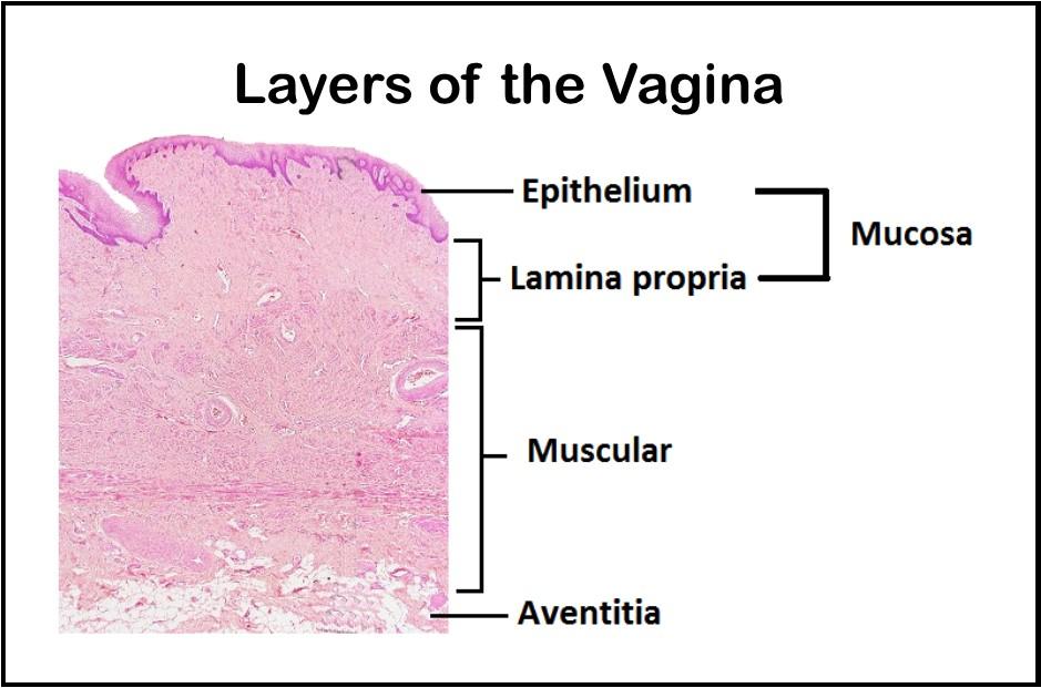 External anal vaginal dryness